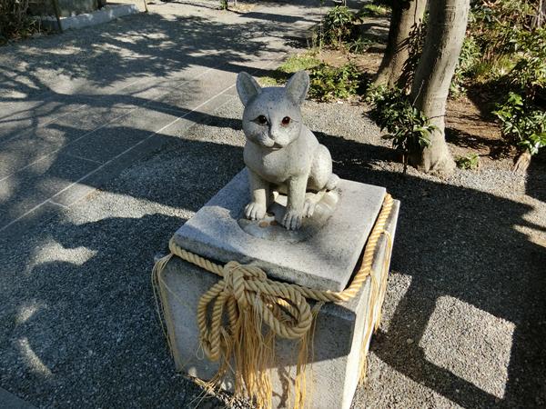 阿豆佐味天神社の猫