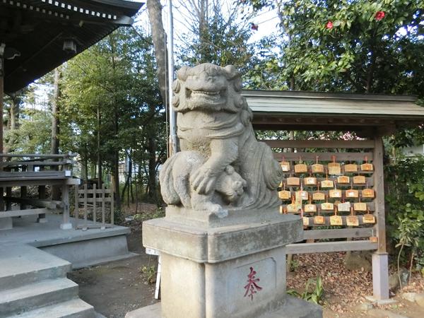 立川熊野神社の右の狛犬