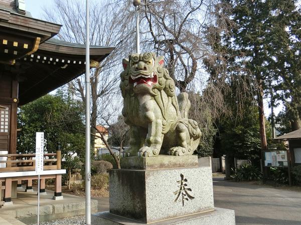 恋ヶ窪熊野神社の右の狛犬
