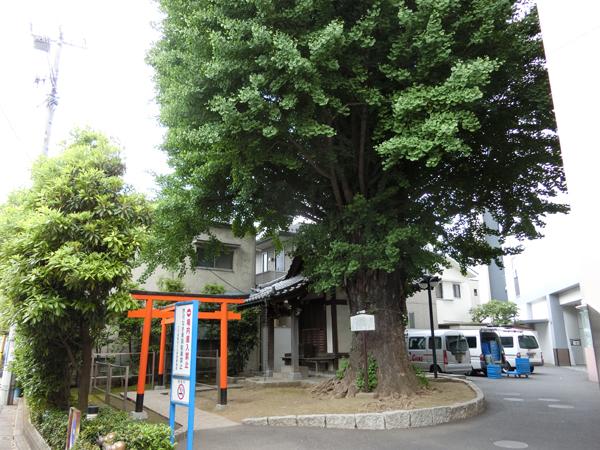 稼穡稲荷神社の大銀杏