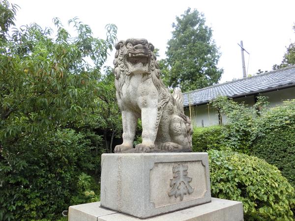 玉姫稲荷神社の右の狛犬