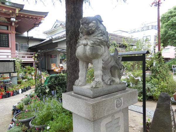 今戸神社の右の狛犬