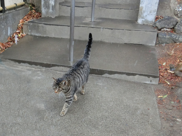 聖神社の猫