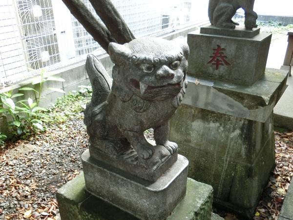 さくら稲荷神社の左の狛犬