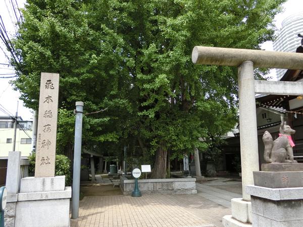 飛木稲荷神社の大銀杏