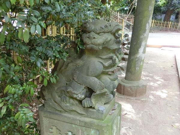 渋谷氷川神社の左の狛犬