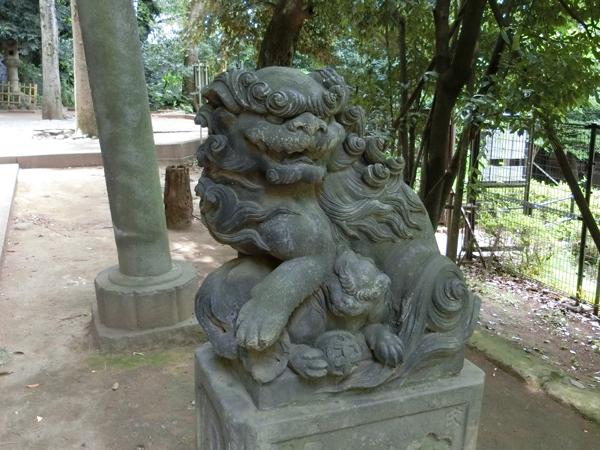 渋谷氷川神社の右の狛犬