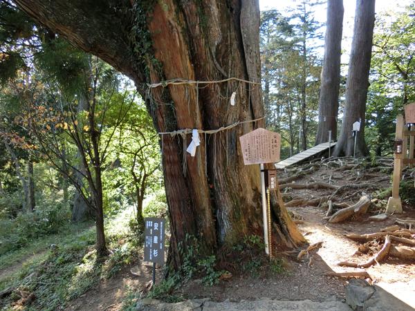 産安社の安産杉