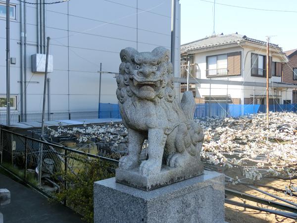 稲城八坂神社の右の狛犬