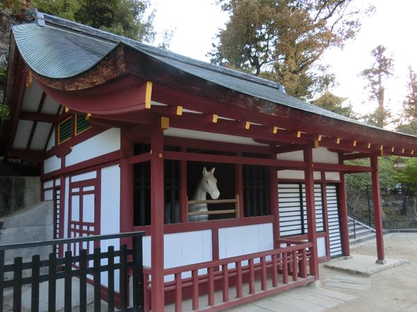 厳島神社の白馬