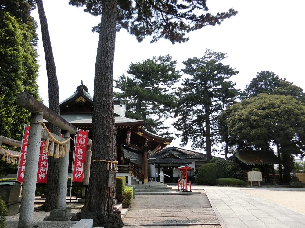 沼袋氷川神社の願い三本松
