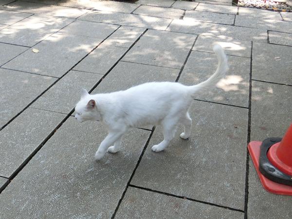 愛宕神社の白猫