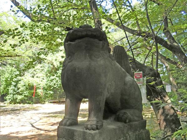 西久保八幡神社の右の狛犬