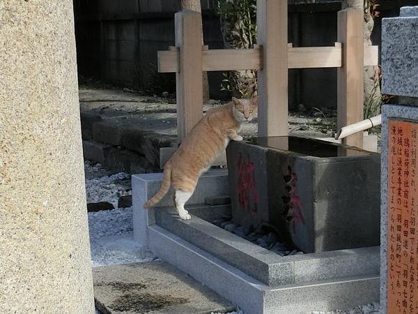 鴎稲荷神社の猫