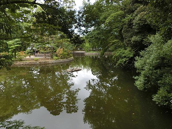 大宮氷川神社の神池