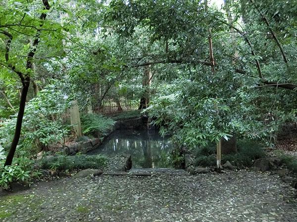 大宮氷川神社の蛇池