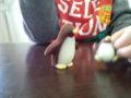 ペンギンチョコレートがかわいくて食べられない6歳児
