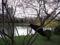 中島公園の桜ちょい咲き