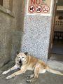 昇平戯院前の犬