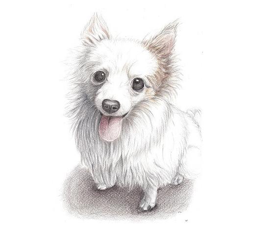 犬にもわかる株主優待 まる 色鉛筆画