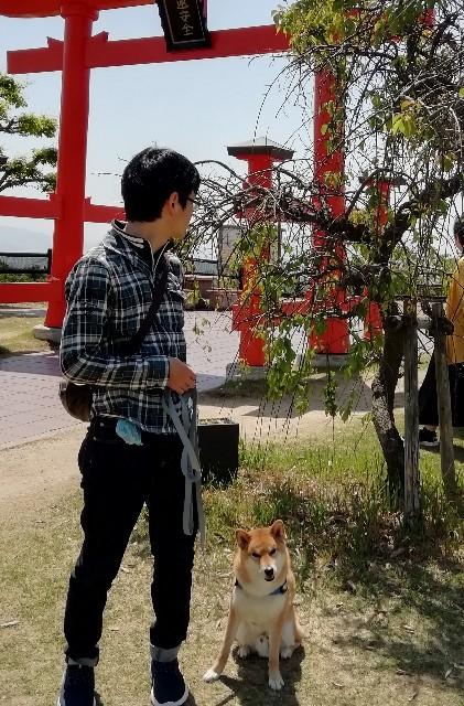 f:id:inuhitogurashi:20190510071140j:image