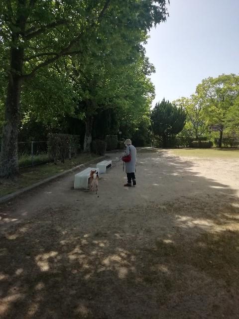 f:id:inuhitogurashi:20190531144620j:image