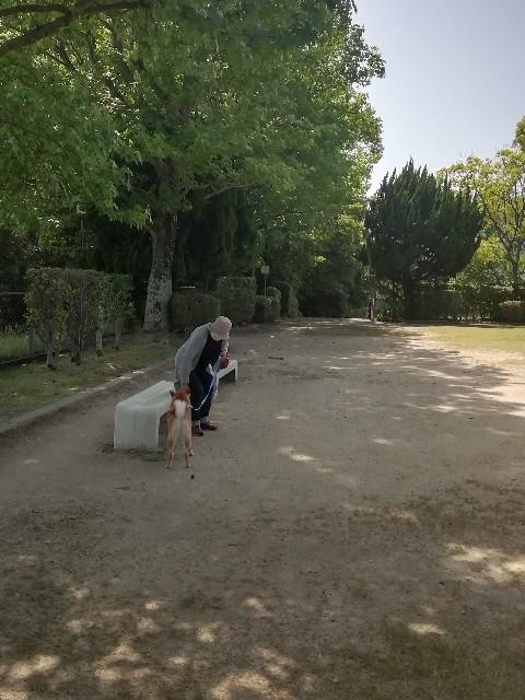 f:id:inuhitogurashi:20190531144639j:image