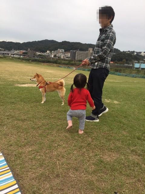 f:id:inuhitogurashi:20191025140417j:image