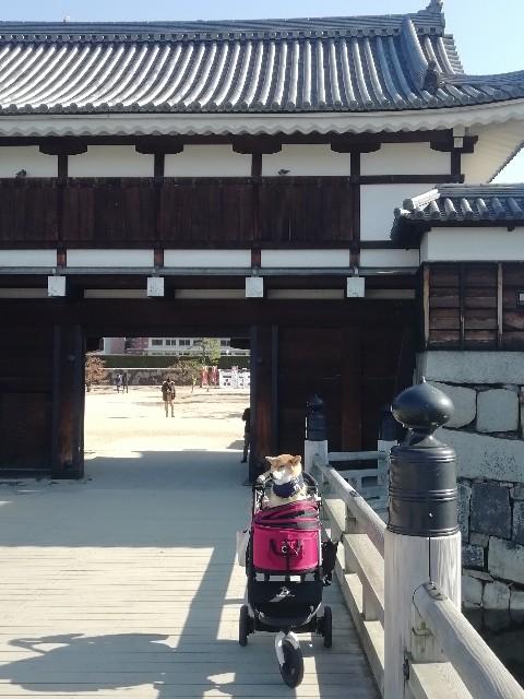 f:id:inuhitogurashi:20191216185628j:image