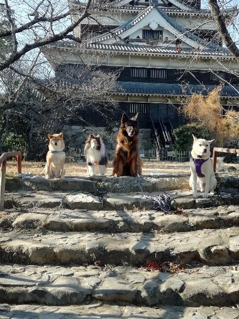 f:id:inuhitogurashi:20191216185659j:image