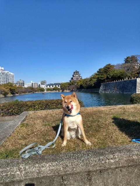 f:id:inuhitogurashi:20191220111945j:image