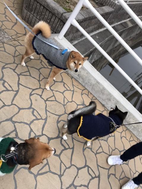 f:id:inuhitogurashi:20200106140714j:image