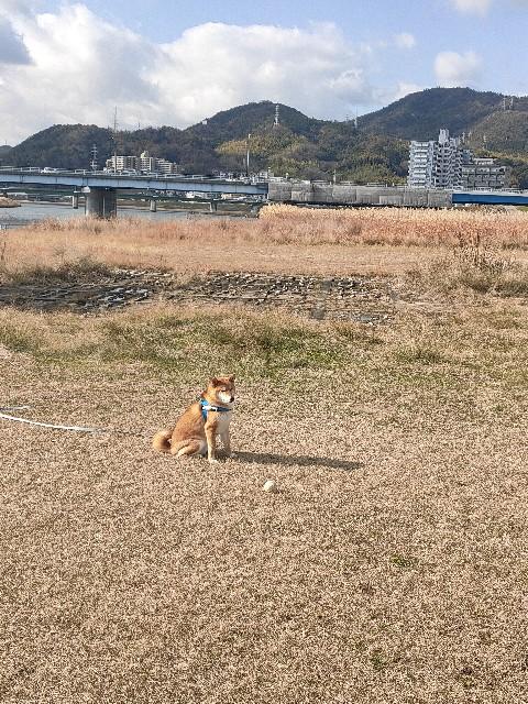 f:id:inuhitogurashi:20200110093447j:image