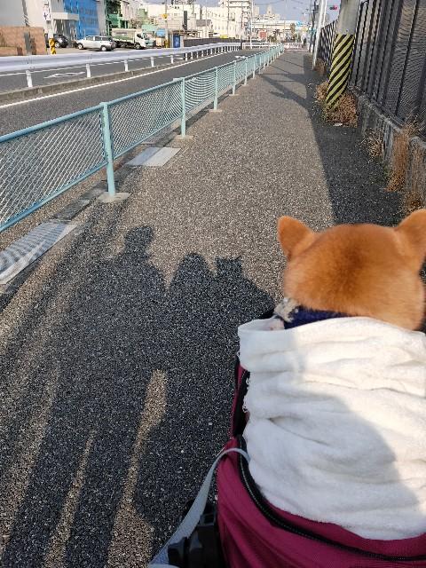 f:id:inuhitogurashi:20200204105438j:image