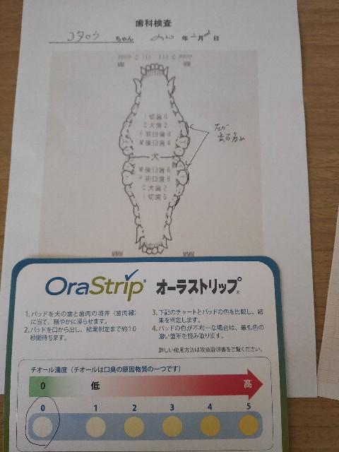 f:id:inuhitogurashi:20200210081836j:image