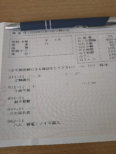 f:id:inuhitogurashi:20200210083117j:image