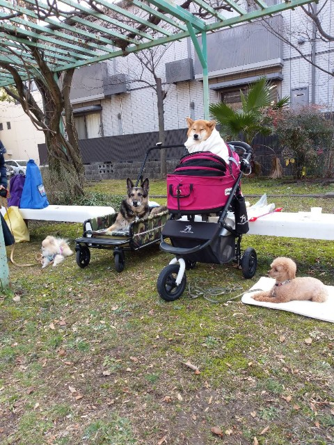 f:id:inuhitogurashi:20200220081616j:image