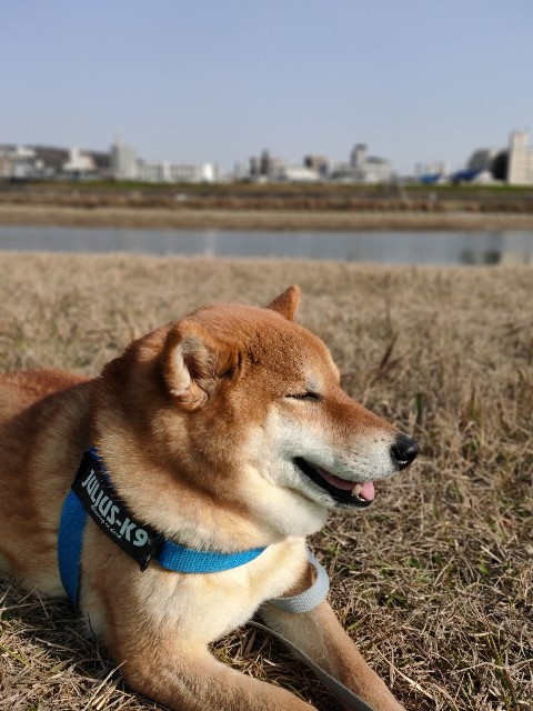 f:id:inuhitogurashi:20200512102333j:image