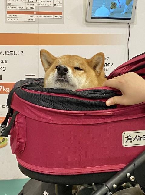 f:id:inuhitogurashi:20200622085052j:image