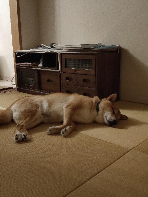 f:id:inuhitogurashi:20200715194551j:image