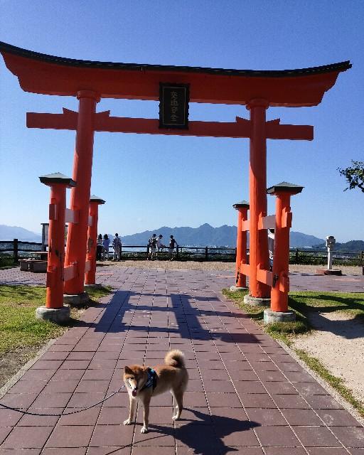 f:id:inuhitogurashi:20200817132759j:image