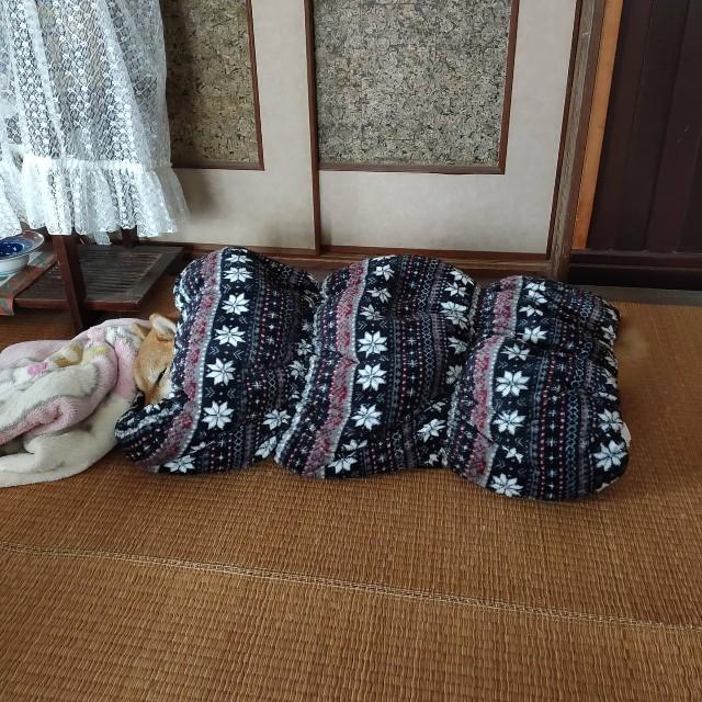 f:id:inuhitogurashi:20201126063818j:image