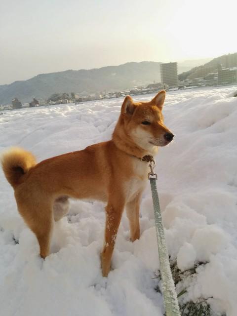 f:id:inuhitogurashi:20201228060031j:image