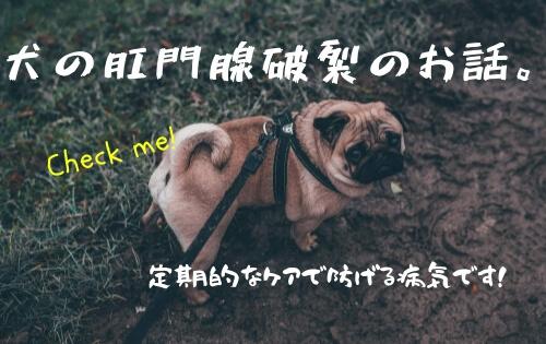 f:id:inunokoto:20190322223000j:plain