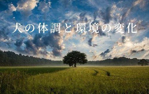 f:id:inunokoto:20191007221251j:plain