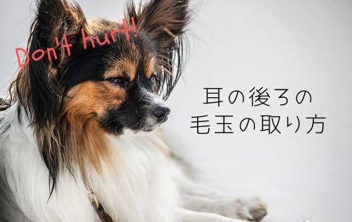 f:id:inunokoto:20191016004635j:plain
