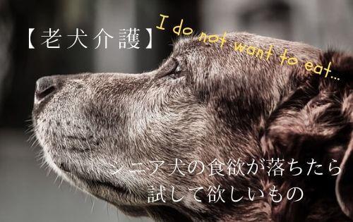 f:id:inunokoto:20191019204612j:plain