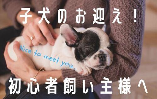 飼い主に抱かれて眠るフレンチブルドッグの子犬の写真