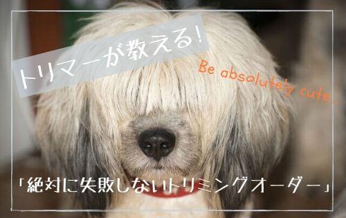 前髪の長い犬の写真
