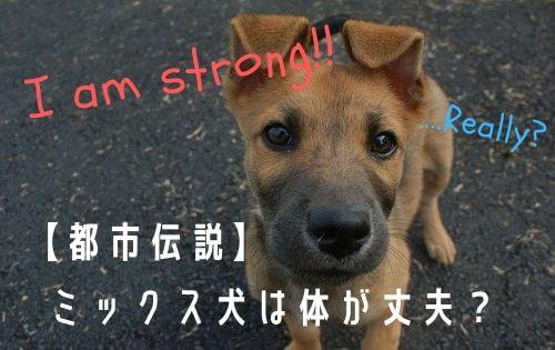 茶色い子犬の写真